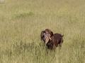 Hundetræning 01-06-2017