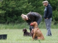 Hundetræning 08-06-2017
