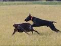Hundetræning 18-05-2017