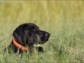 Hundetræning 25-08-2016