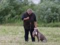 Hundetræning 29-06-2017